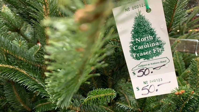 close-up image of Fraser fir Christmas Treetree