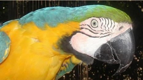 freeflightbird1