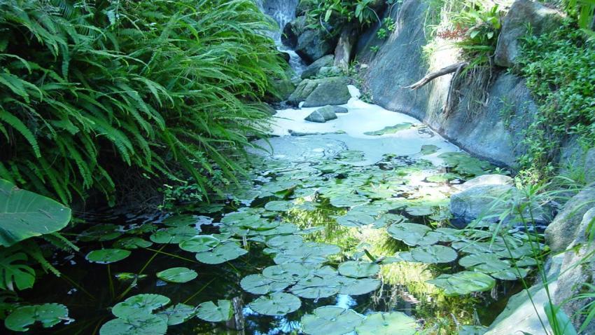 [UGCDGO] Emailing: Quail Botanical Gardens 066 (21)
