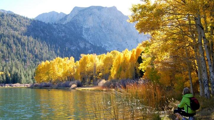 leavesLittle Walker Lake 10.20.14 (1)