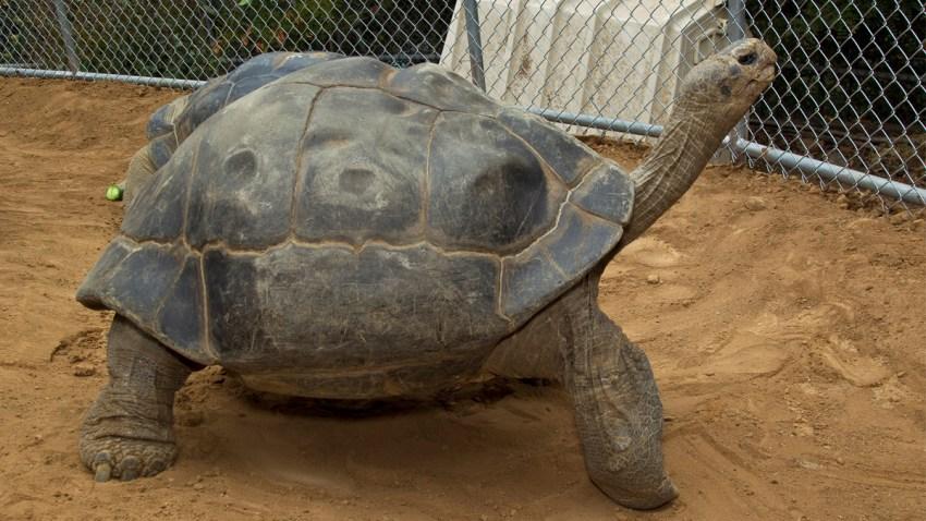 speed tortoise san diego zoo web