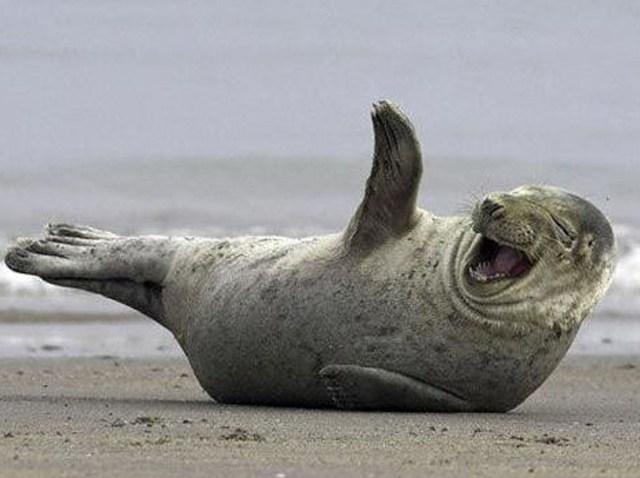 walrus-lol