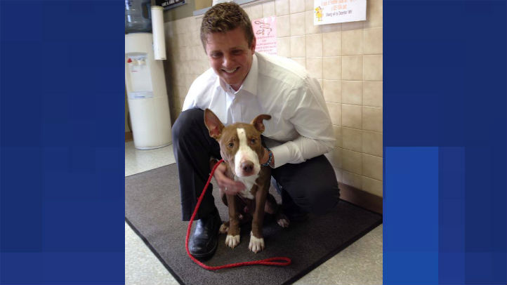 washington dog found