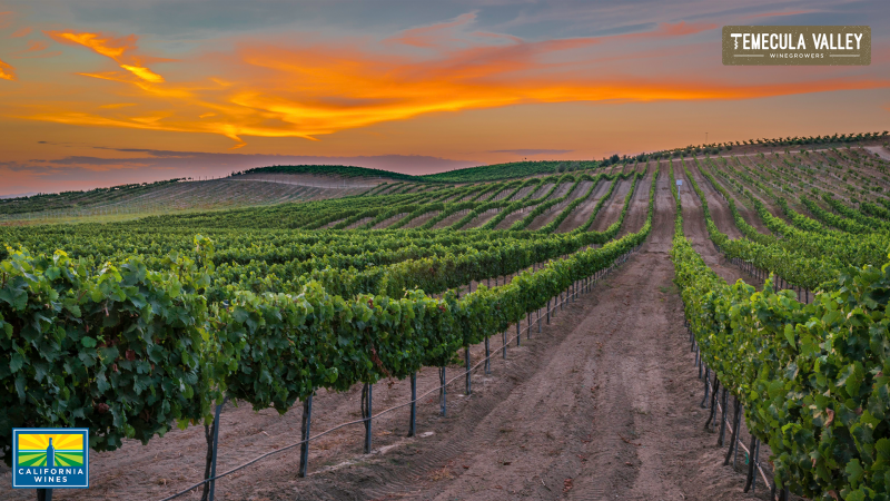 Your Next Zoom Background: California Wine Country