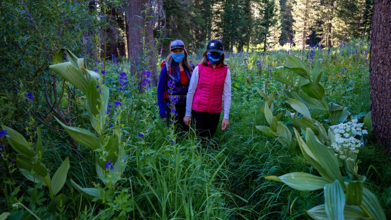 'Chest-Deep' Wildflowers Are Blooming in Reds Meadow