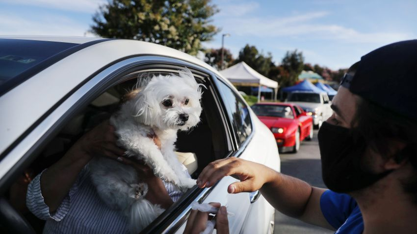 A veterinary technician prepares to vaccinate a dog named Cohiba at a drive-through pet vaccine clinic at Mission Viejo Animal Services Center amid the COVID-19 pandemic on June 23, 2020 in Mission Viejo, California.