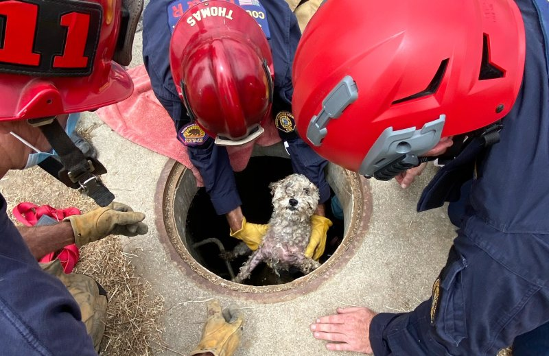 Puppy Stuck in Drainpipe for Days Rescued in Santa Barbara