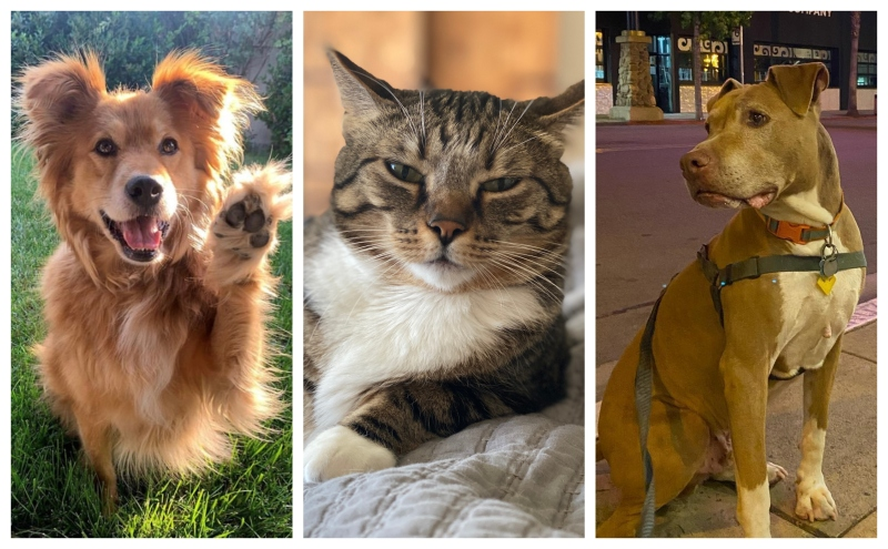 Meet the Dogs and Cats of NBC 7
