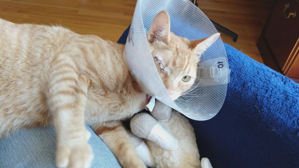 An orange cat rests with its head inside a plastic protective cone