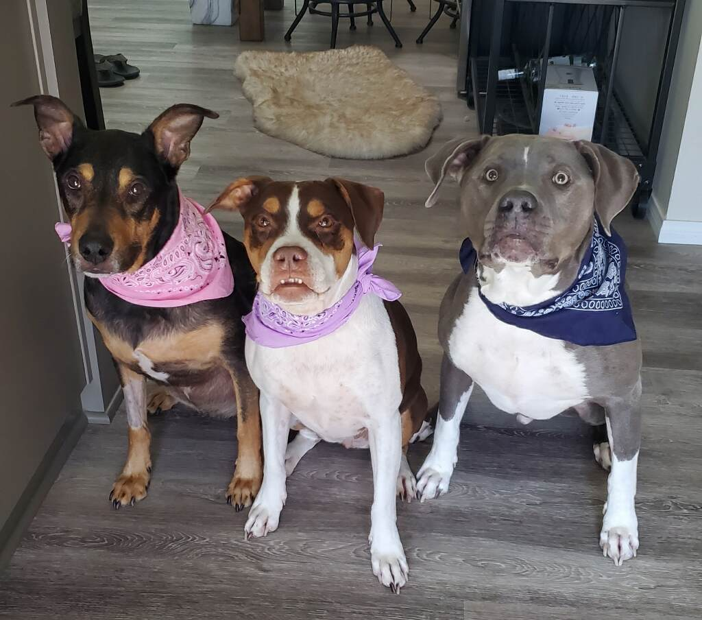 From left to right: Roxie, Pixie and Bash.
