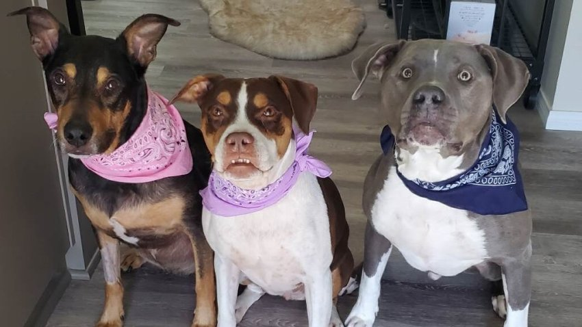 Roxie, Pixie and Bash pose in their matching bandana sets.