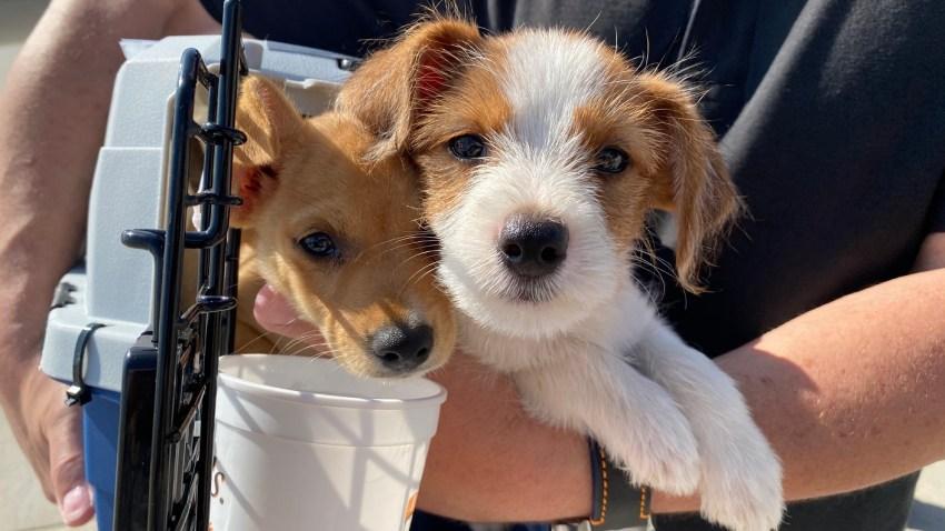 Dozens of dogs were flown from Louisiana to El Cajon on Thursday, Oct. 8, 2020 ahead of Hurricane Delta's landfall in the Gulf Coast.