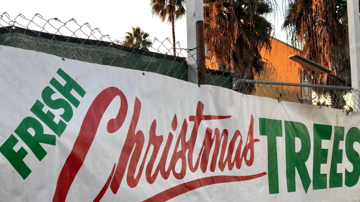 Christmas Trees in the Pandemic-Era: Family-Owned Business in San Diego Adapts – NBC 7 San Diego