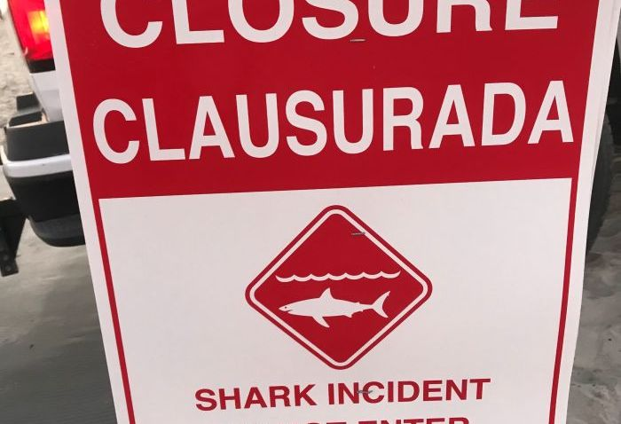 Signs posted along the beach in Coronado after a juvenile shark made contact with a swimmer.