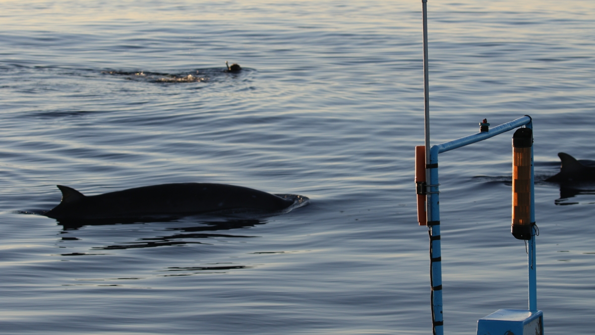 Uncovered Underwater: Local Researchers May Have Discovered a New Whale Species