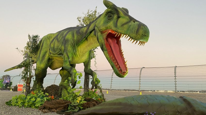 An image of an animatronic dinosaur from the Jurassic Quest Drive Thru.