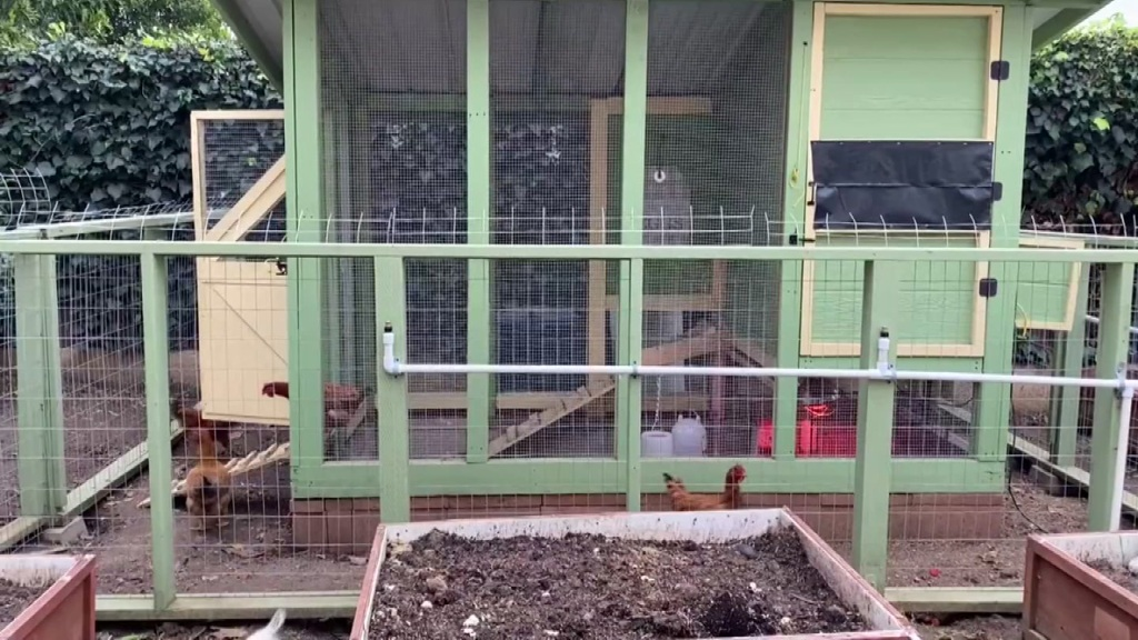 A look at a backyard chicken coop in San Diego.