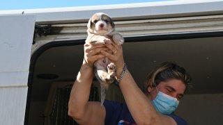 Texas dog arrives at Helen Woodward Animal Center