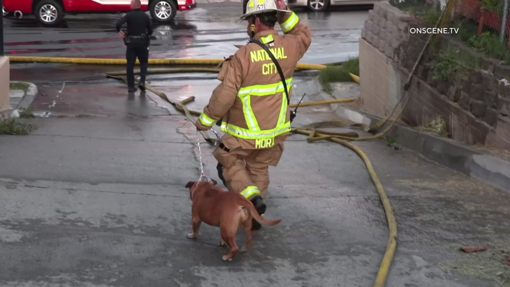 A National City Fire Department firefighter escorts a dog that was saved in the house fire.