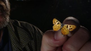 Biologist/entomologist Michael W. Klein holds a preserved Hermes Copper butterfly he collected here