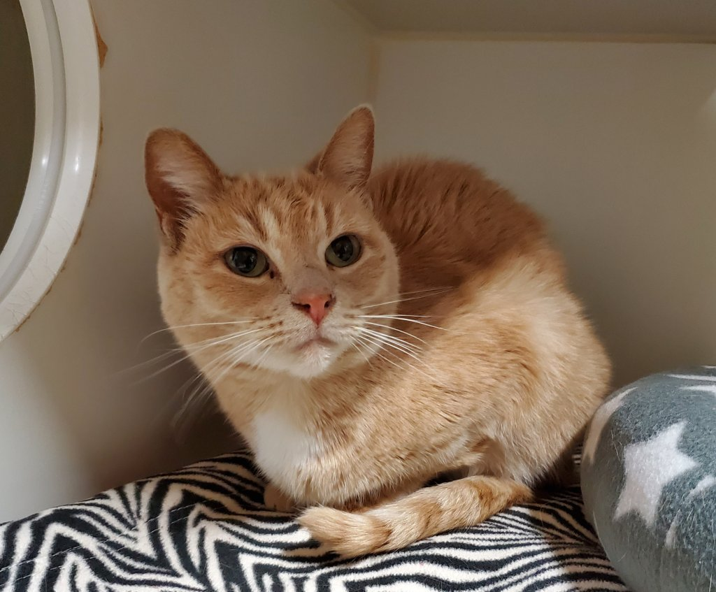 This beautiful lady, Kate, sits comfortably in her space but would love nothing more than to join a loving household. She's been chosen as a featured pet and has her adoption fee waived!