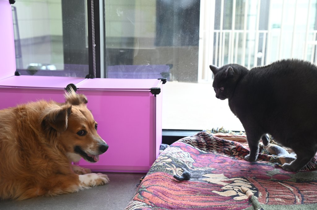 Nalani and Sebastian meet for the first time. They are respectful of their boundaries and enjoy each other's company.