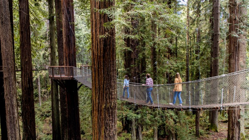 Walk Among the Redwoods on a Dazzling New Sky Walk