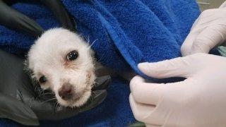 Puppy found in Dumpster