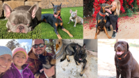 Dog Owners Question What Happened After Their Pooches Go Missing From Riverside Boarding Business