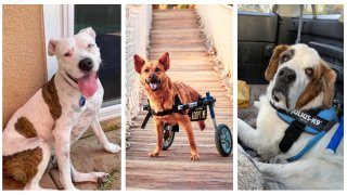 All three adorable pooches are available adoption from The Animal Pad. Left to right: Athena, Bebe and Buick.