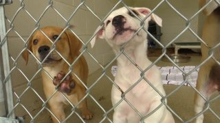 A couple of puppies at a San Diego animal shelter.
