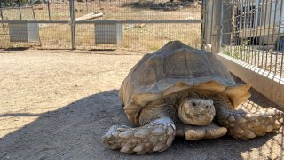 New Tortoise at Lions Tigers & Bears Animal Rescue 2