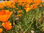 [UGCDGO-CJ-weather]Bee and Poppy