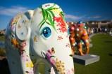 elephant2danapoint