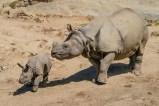 Late Summer Baby Boom at San Diego Zoo Safari Park:Say Hello to