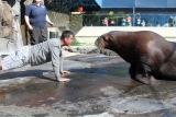 49ers' Harbaugh in Push-Up Contest With Walrus
