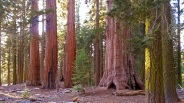 Go Now: Mariposa Grove