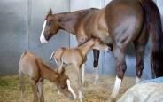 Twin Foals' Birthday