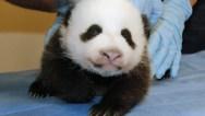10. Returns to Panda Cam/Public Adoration