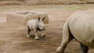 Edward Charging San Diego Zoo safari Park