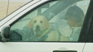Dog-in-car-on-rainy-day