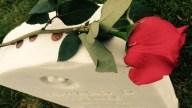 memorial-day-2016-rose