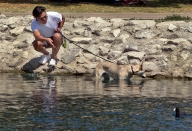 Dog Finds Relief in Echo Park Lake