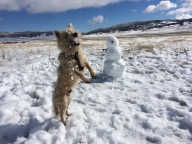 [UGCDGO-CJ-weather]dogs like snow too