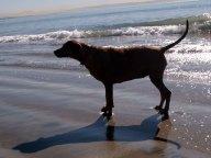 Dog-Beach-640x480
