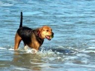 Ocean-Beach-Dog-5