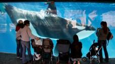 SeaWorld Announces Layoffs