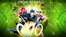Cirque Du Soleil's 'OVO' Announces San Diego Shows