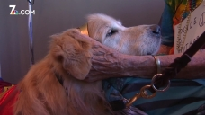 Therapy Dogs Visit Cancer Patients