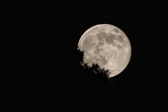 NBC 7 Users Share Images of Super Moon